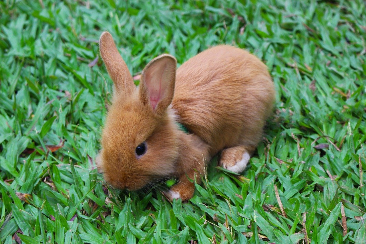 How To Take Care Of A Runt Bunny