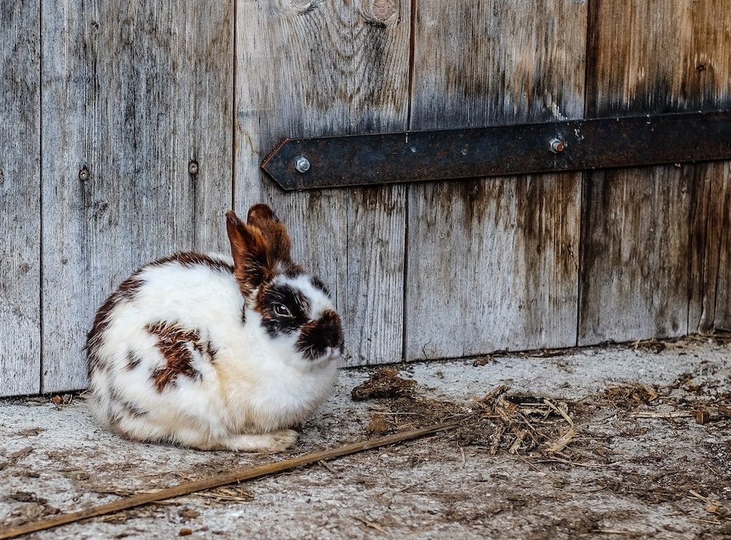 5 Simple Steps to Rabbit Proof Your Home