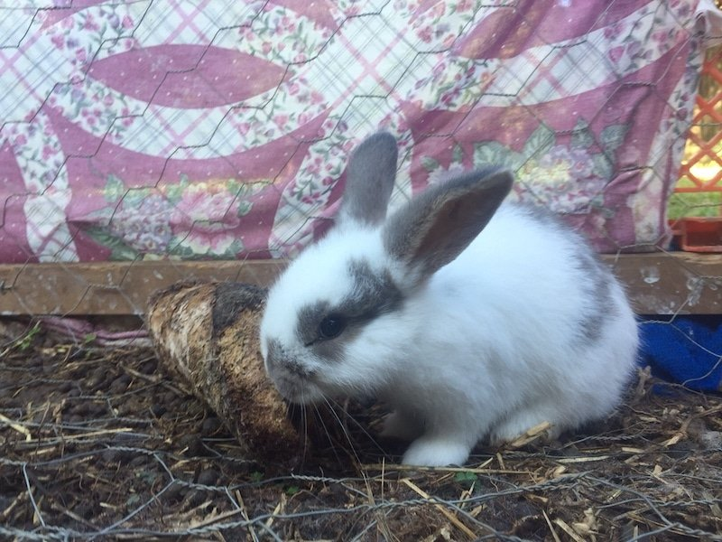 Is My Bunny Happy? Understanding Your Rabbit