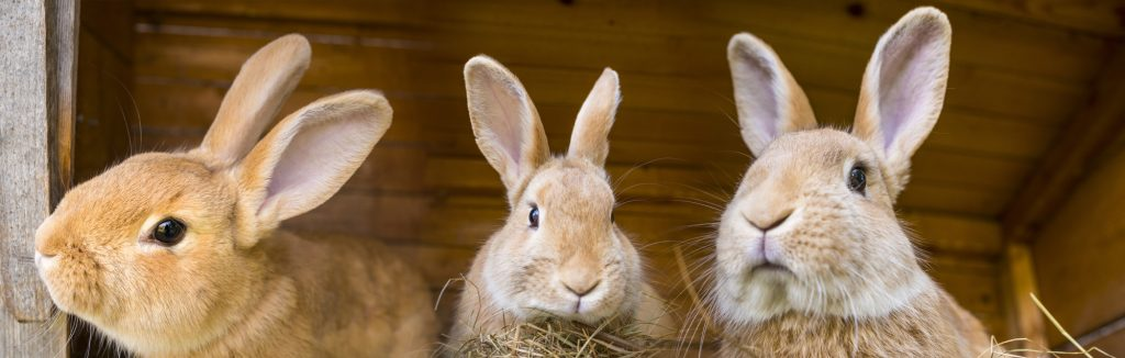 7 DIY Homemade Rabbit Treats to Make for Your Pet