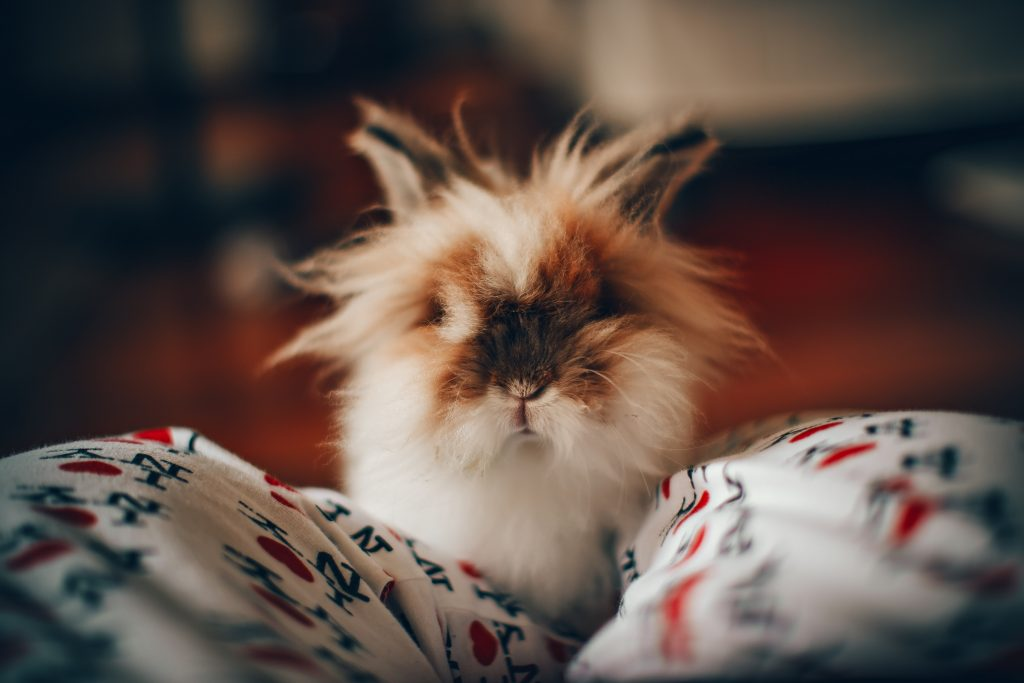 Here's What Flooring You Should Use For Your Rabbit's Living Quarters