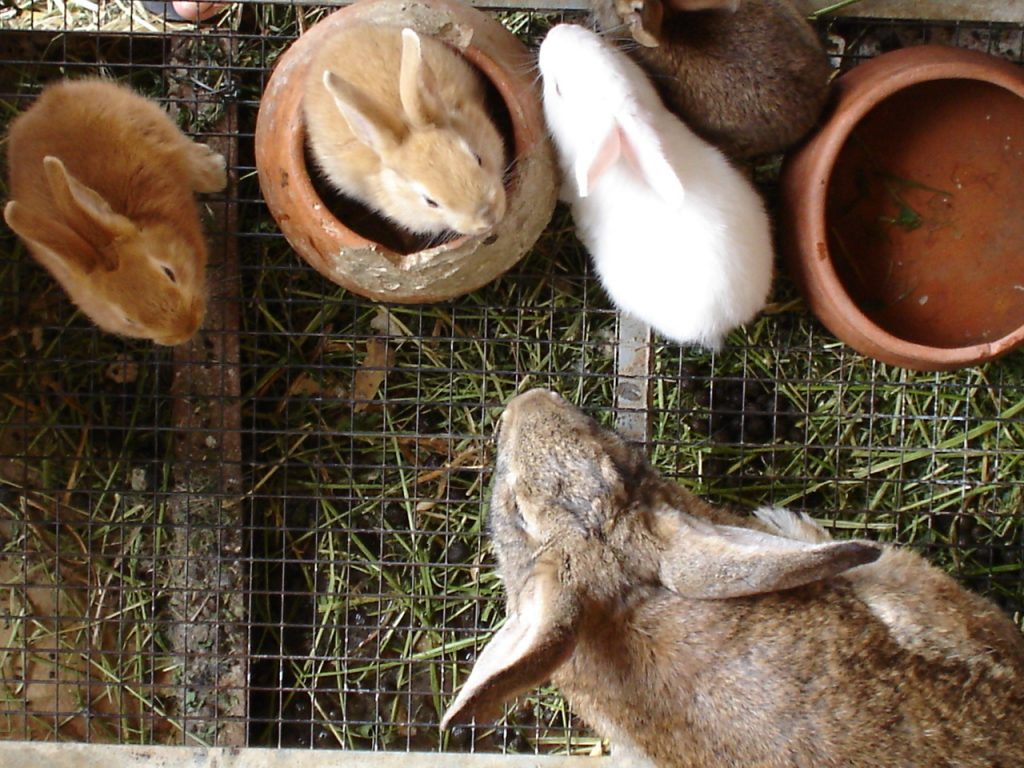 Everything You Need To Know About Adopting A Bunny